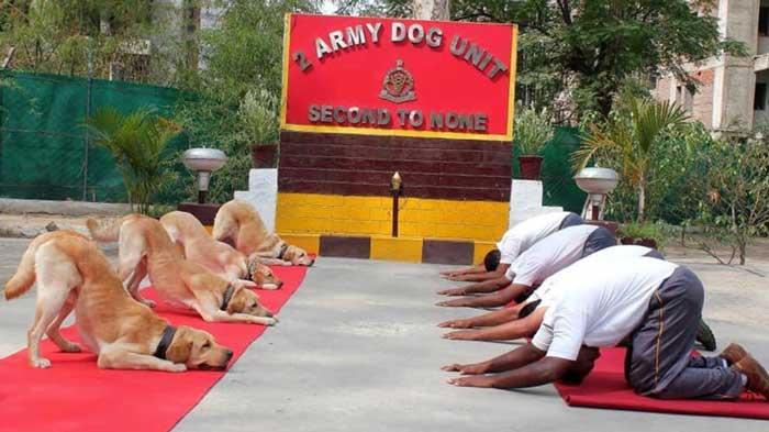 Rahul Dogs Yoga Tweet 1