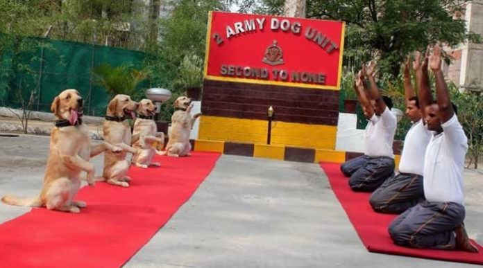 Rahul Dogs Yoga Tweet