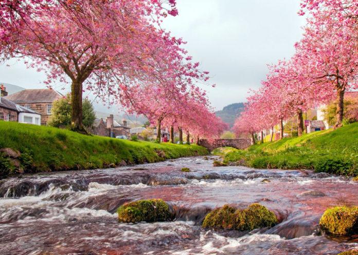 Nature Flowers Trees