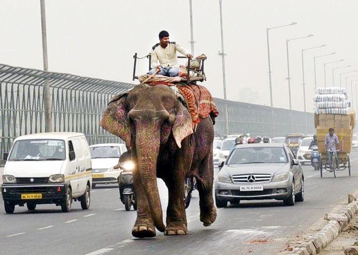 Missing elephant Delhi