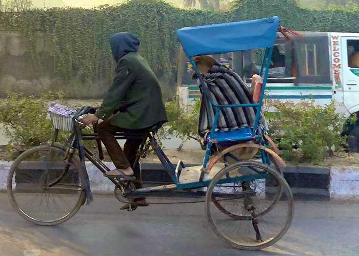 Dog on Rickshaw
