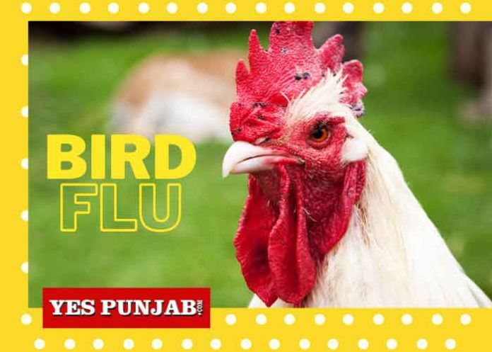 Bird Flu India