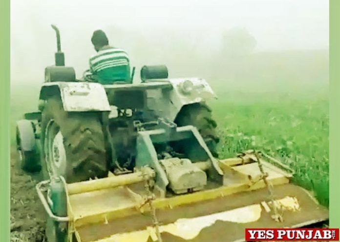 Farmer Destroys Crop