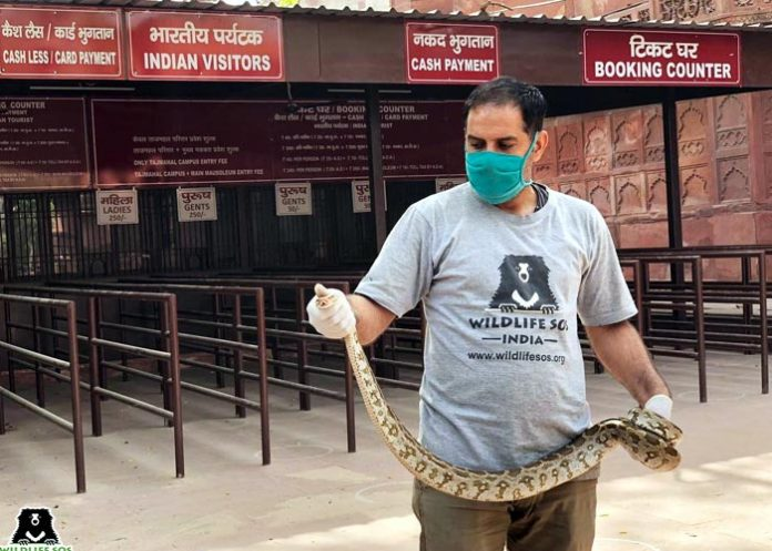 Python sighted Taj Mahal ticket counter
