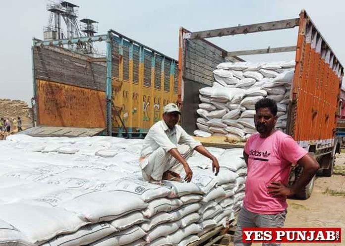 Wheat Procurement By Jalandhar Admin