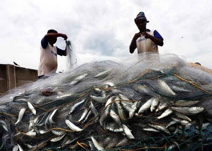 Fisherman India