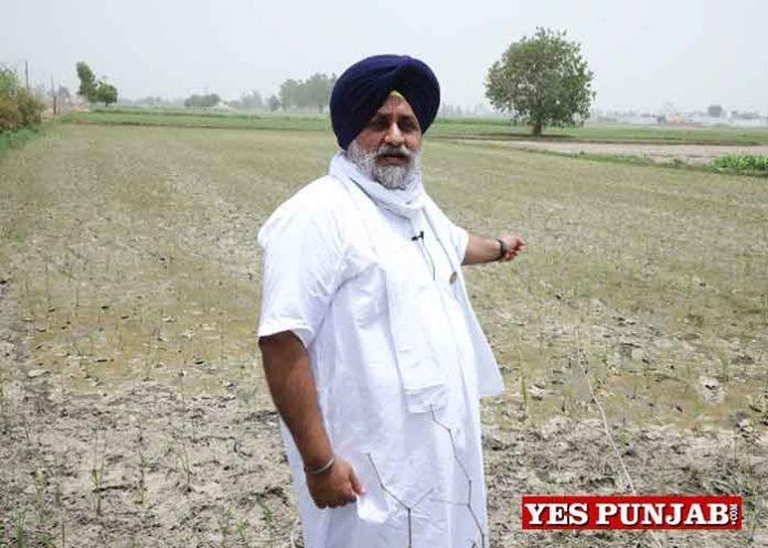 Sukhbir Badal in field